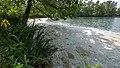 LSG-Baggersee Juelich-Kirchberg mit Ruruferbereich Baggersee Nordost mit Ufervegetation zur Pappelbluetezeit I.jpg