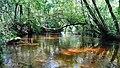 La Palue rivière d'eau douce avec peu de fond, Léon landes en France.jpg