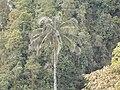 La palma de ramo - panoramio.jpg