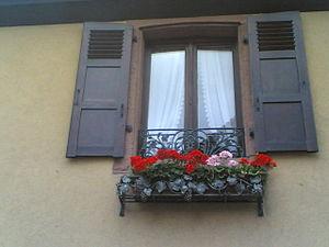 La viña en el balcón 13082006(050)byCme