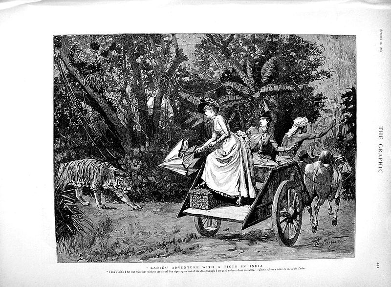 File:Ladies' adventure with a tiger in India (The Graphic, 1889).jpg