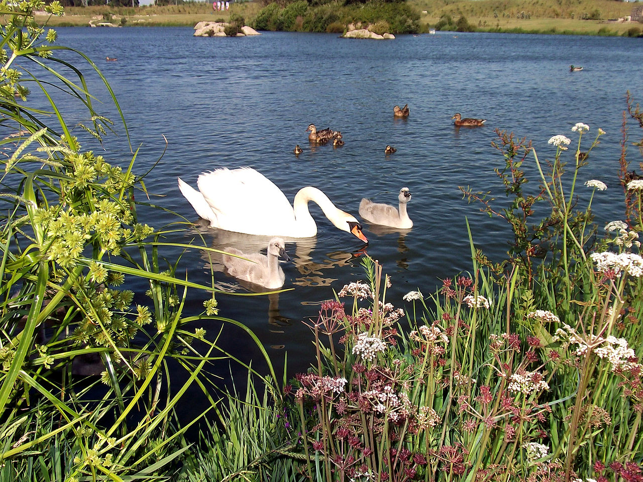 fauna lago: