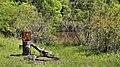 Lake Livingston SP Bird Bath and Duck Pond.jpg