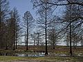 Lake Phelps from Somerset.jpg