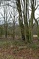 Landschap De Stroopers te Kemzeke - 371866 - onroerenderfgoed.jpg