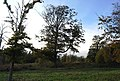 Large Oak tree, Penshurst Place Estate. - geograph.org.uk - 1028705.jpg