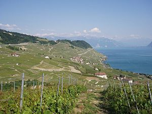 Lavaux Epesses.jpg