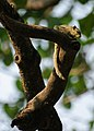 Law Garden, Ahmedabad - India (4054855033).jpg