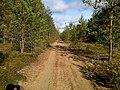 Liivatee metsas - panoramio.jpg