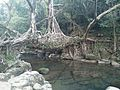 Living Root Tree Bridge.jpg