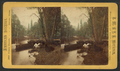 Looking up the Merced River, Yos. Val. Cal, by J. W. & J. S. Moulton.png