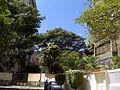 Los Pinos (2012) 025.jpg