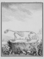 Loutre, Squelette - Otter, Skeleton - Gallica - ark 12148-btv1b2300254t-f19.png