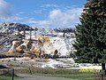 Lower Tarrace Area,Mammoth Hot Spring, YNP - panoramio.jpg