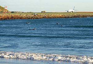 Lyall Bay Surfers - Flickr - 111 Emergency.jpg