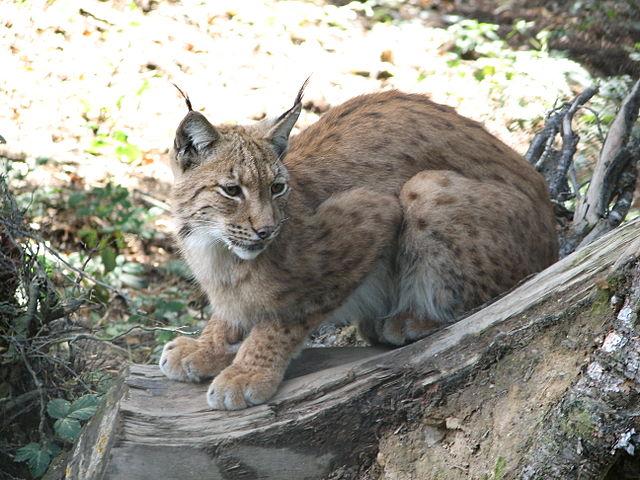 Mish Cat Name