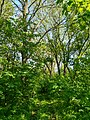 MD.DN.Rediul Mare - park of Rediul Mare - apr 2018 - 68.jpg