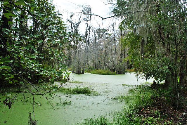 File Magnolia Plantation And Gardens Charleston South Carolina 16 Jpg Wikimedia Commons
