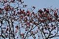Magnolia in Lloyd.jpg