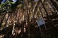 Makidaira yosui route 02.jpg