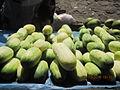 Malawi`s Cucumber.JPG