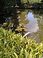 Mallard mother on Mothers day at Japanese Tea Garden (4594286893).jpg