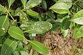 Mangroves 03974.JPG