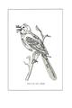 Manual of Bird Study 0010-0.png