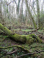 Matley bog near kings passage.jpg