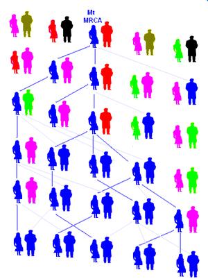 Illustration of matrilineal descent (Image via Wikipedia)