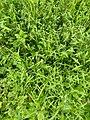Mauvais herbes pobé.jpg