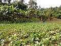 Mawlaik, Myanmar (Burma) - panoramio (13).jpg