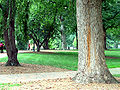 McCorkle Place 2006.jpg