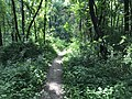 Mercer County Park Mountain Bike Trail.jpg