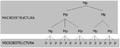 Microestrutura e macroestrutura.png
