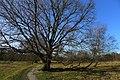 Moje Drzewo - panoramio.jpg