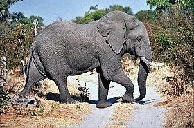 Image illustrative de l'article Moremi Game Reserve