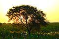 Morning behind the tree.jpg