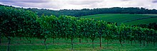 Mornington Peninsula vineyard.jpg