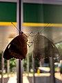 Moth Mirror.jpg