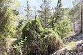 Mount Eitan IMG 2633.JPG