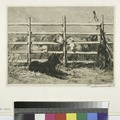 Moutons parqués, d'après Brendel (NYPL b14504923-1130966).tiff