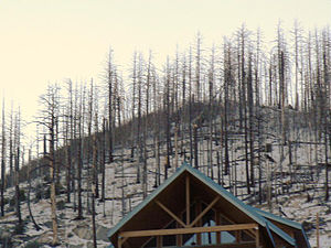 Summerhaven, Arizona - Burnt pine trees, snow, and a cabin among the stark landscape after the Aspen Fire in 2003