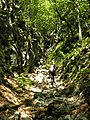 Mudna dol - panoramio (2).jpg