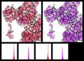 File:Multilevel-Selection-in-Models-of-Prebiotic-Evolution-II-A-Direct-Comparison-of-pcbi.1000542.s004.ogv