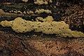 Mushroom (36338269881).jpg