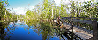 Muurame - Image: Muurame nature trail