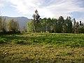 Nancagua. - panoramio (1).jpg