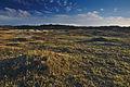 Nationaal Park Zuid-Kennemerland (19).jpg
