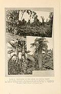 Natural history of Hawaii (Page 190) (7007392462).jpg